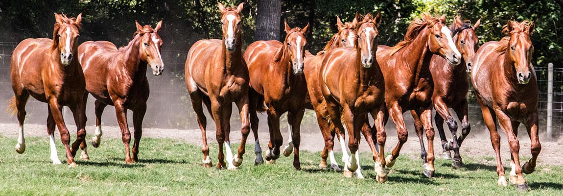 steuerengel-pferdebetrieb